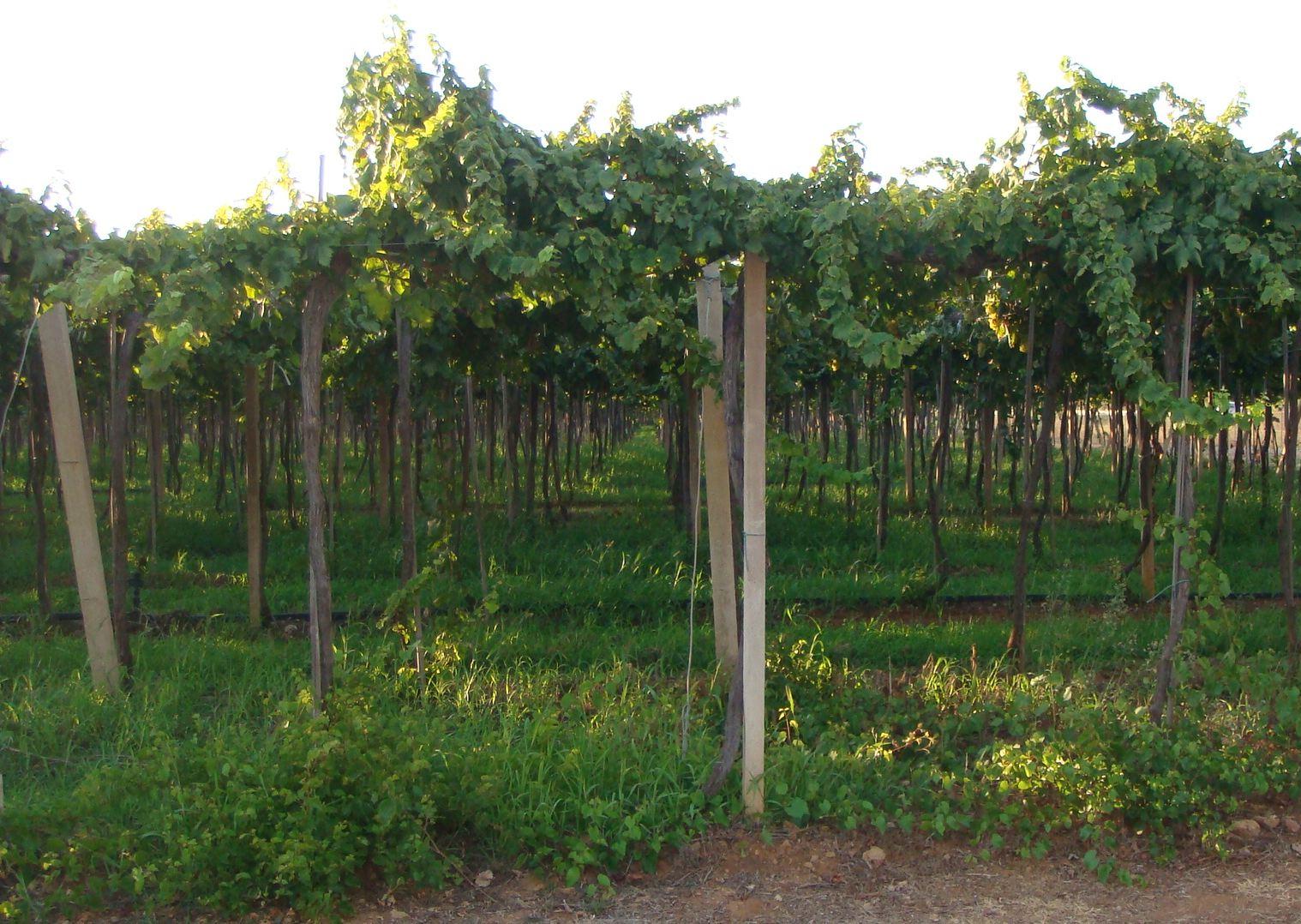 vino-sardegna-2