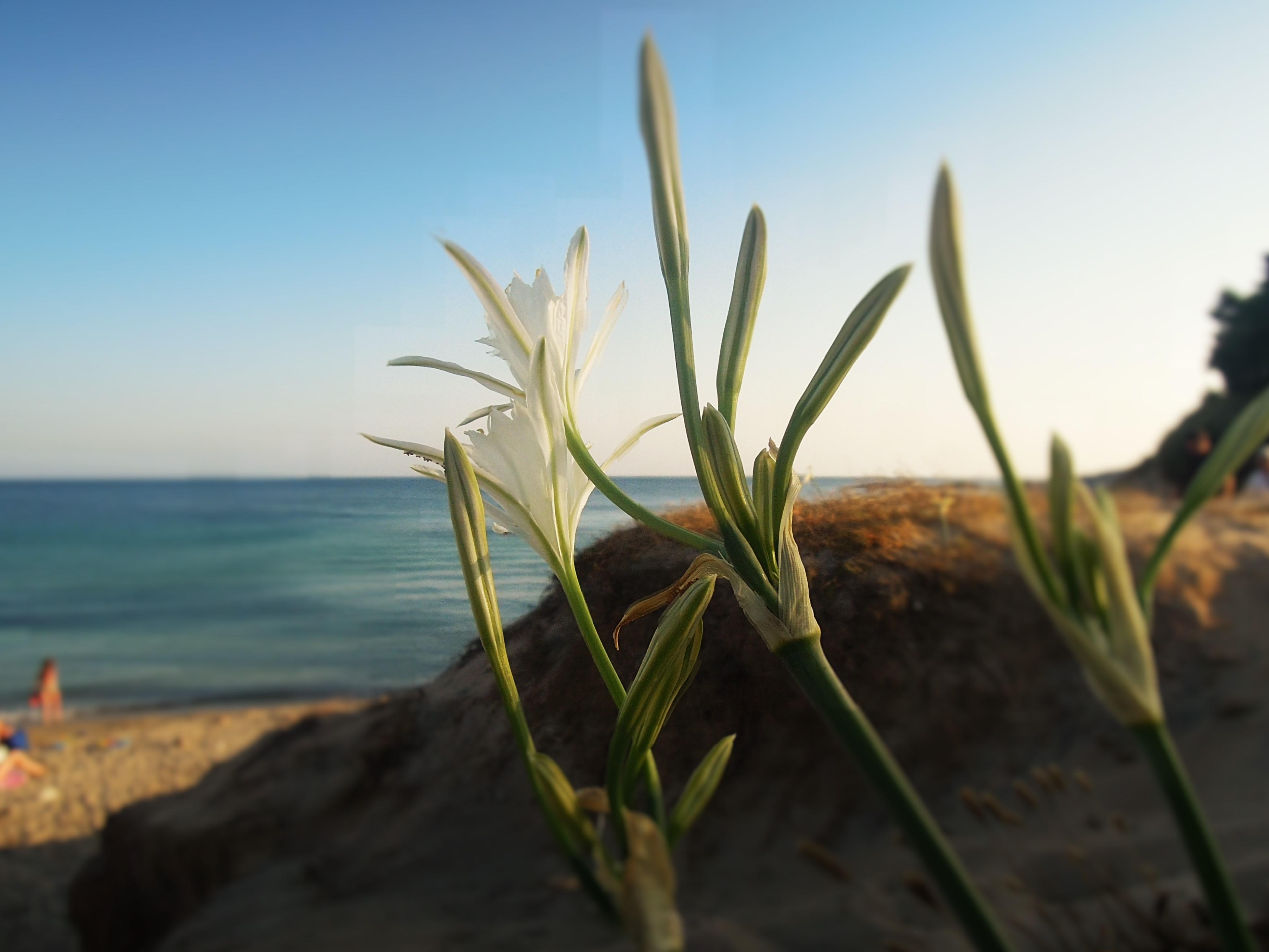 carloforte - spiaggia