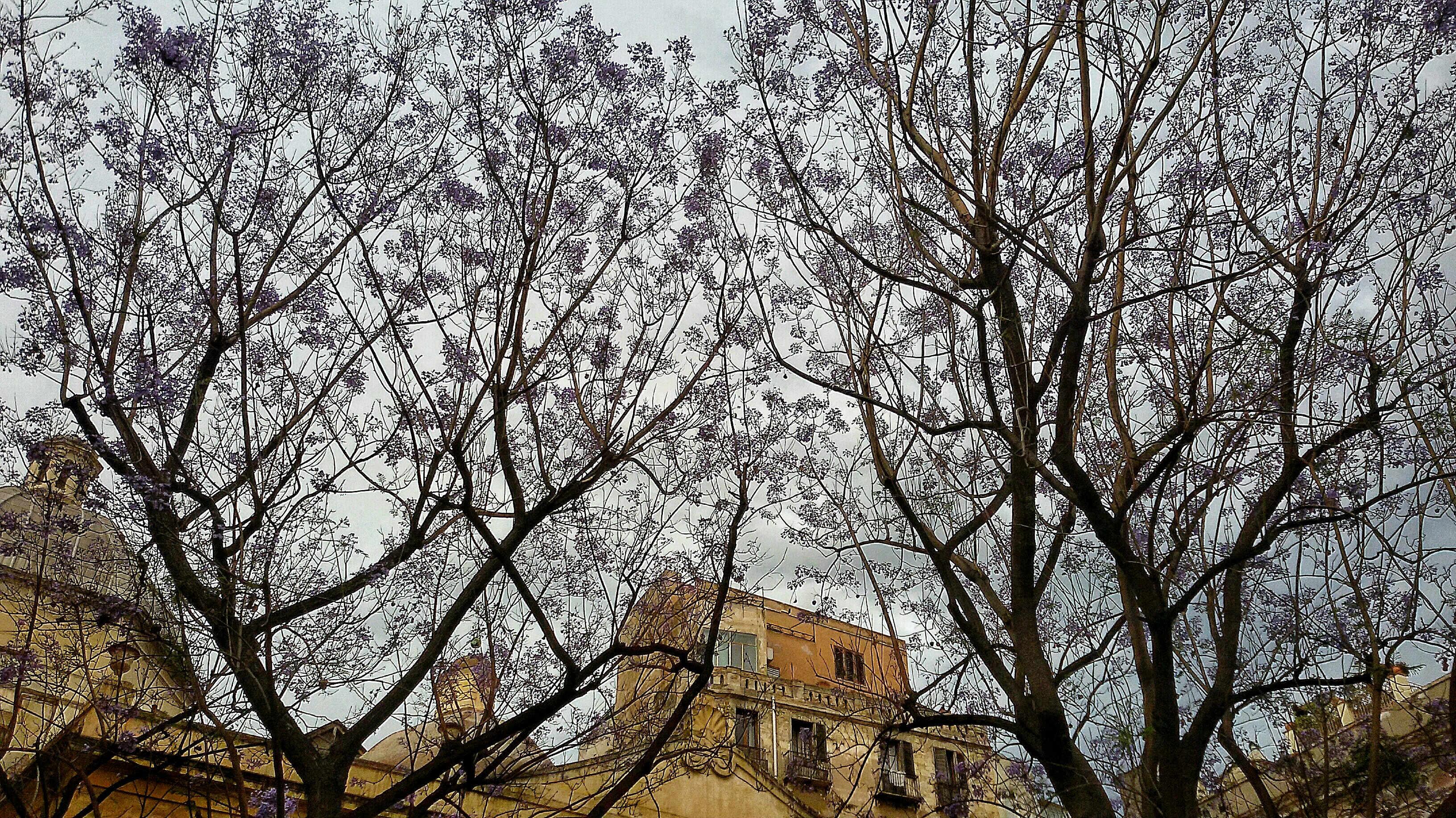 Jacaranda - piazza San Sepolcro 1