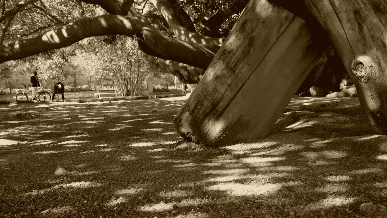 giardini-pubblici-cagliari-5
